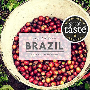 ANVIL Speciality Coffee Beans : Brazil