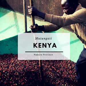 ANVIL Speciality Coffee Beans : Kenya